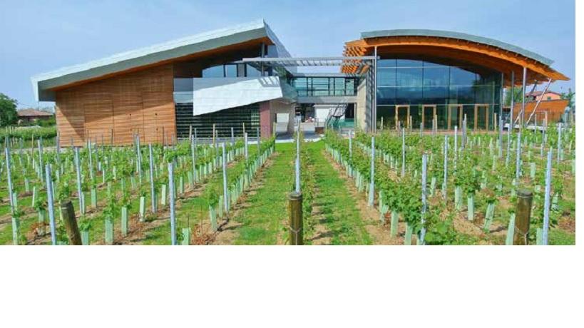 Sgarzi winery